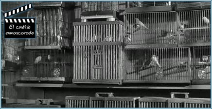 La celda de Alcatraz convertida en pajarería
