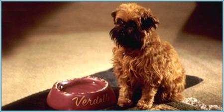 Verdell es el perro de Simon